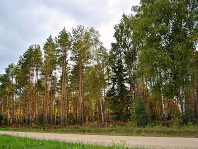 Harvendusraie – Hooldamata (võrdlus Hooldatud Ja Hooldamata Metsa Vahel)
